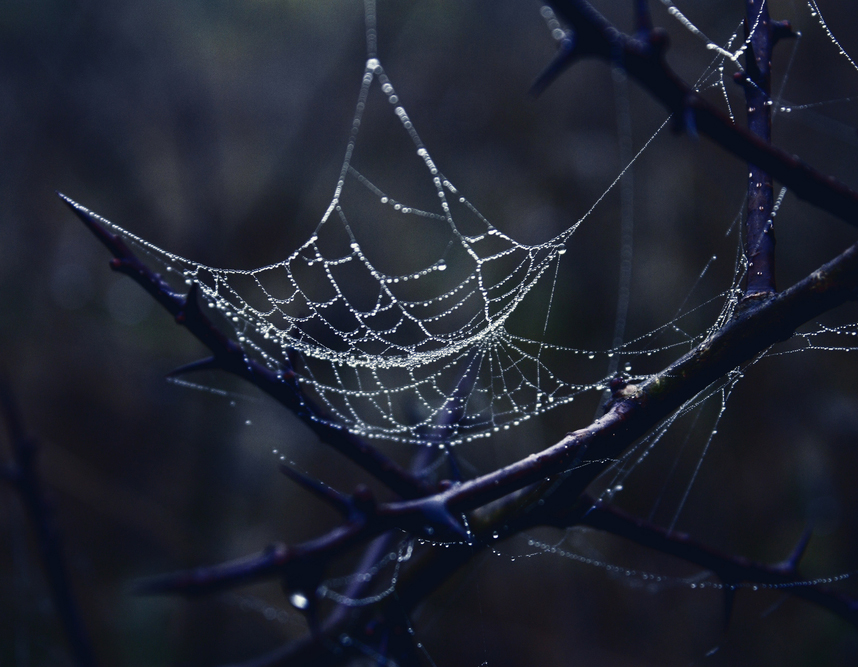 the dark web the land of hidden services icann